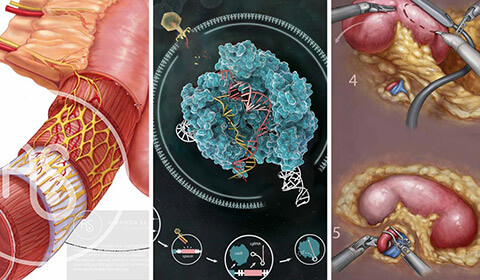 Three medical illustrations created by students.