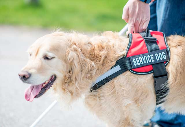 Patient with service dog