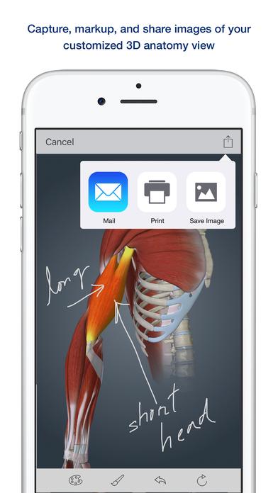 Muscle Anatomy A Johns Hopkins Medicine 3 D App