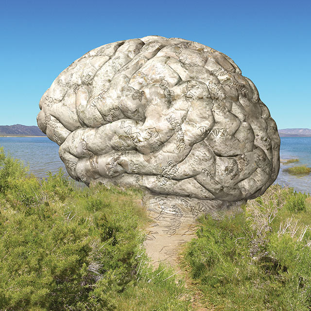 illustration of brain laying in field