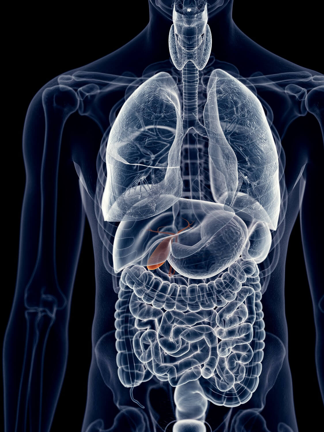 Gallbladder Removal Is Common But Is It Necessary 04032017