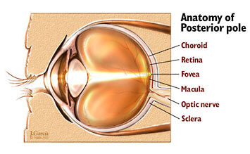 Eye structure and terms ccuart Choice Image