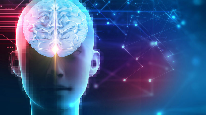 Decoding the Brain's Learning Machine