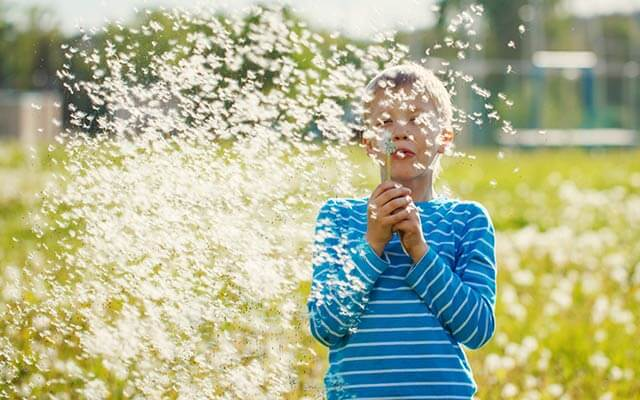 Child blowing a dandelion into the wind.