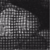 Image of heart tagged using MRI